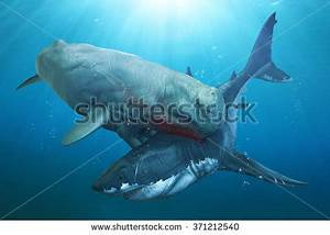 Megalodon Stock Images, Royalty-Free Images & Vectors ...