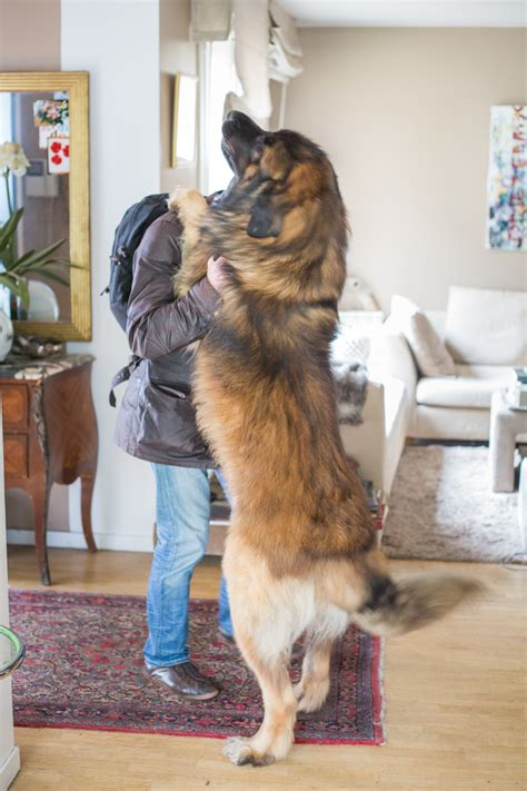 21 Things That Happen When You're Training Your Dog