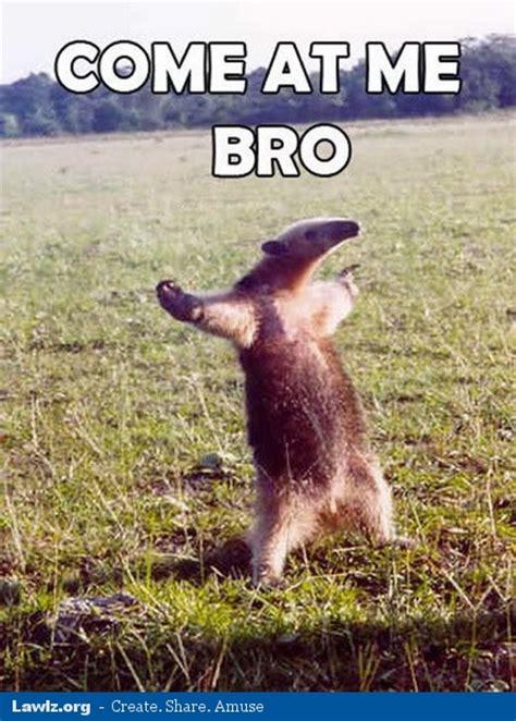 Anteater Meme - lawlz org 169 2018