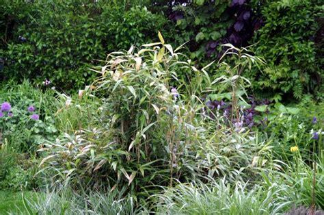 Bambus Entfernen Gift 3877 bambus entfernen gift bambus entfernen ohne chemie so