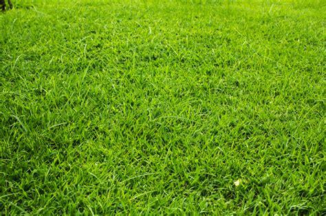 Rasenpflege Im Herbst » So Stärken Sie Ihn Vor Dem Winter