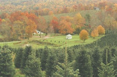 best nc christmas tree farm 417 best images about places i ve been on mansions virginia and tennessee