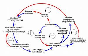 The Core Feedback Loops In The Causal Loop Diagram Of The