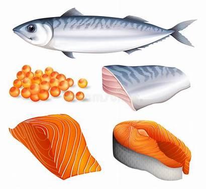 Salmon Cuts Different Eggs Illustration Vector Illustrations