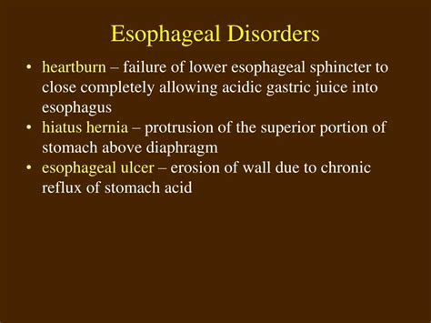 Ppt Topic 8 Digestive System Powerpoint Presentation