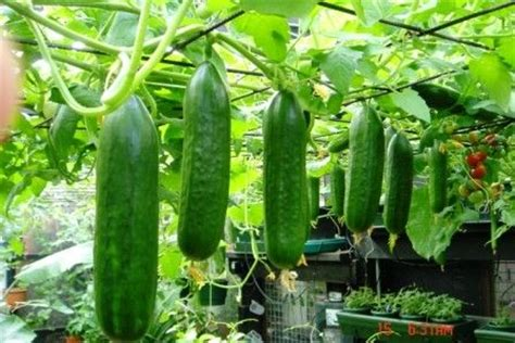 hanging vegetable garden gardensmart display for cucumbers easy picking garden