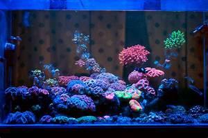 Tiere Für Aquarium : nano aquarium meerwasser fische zuhause image idee ~ Lizthompson.info Haus und Dekorationen