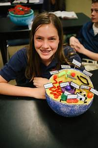 Animal Cell Parts 7th Grade Cell Project
