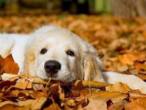 Cute Dog :) - Dogs Wallpaper (33531410) - Fanpop