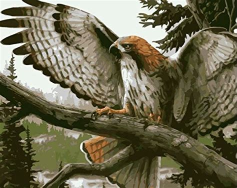 Eagle Paint By Number Kits • Paint By Number For Adults