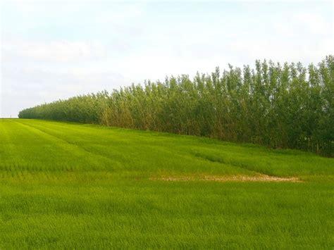 chambre agriculture 76 bandes ligno cellulosiques rentabiliser la protection de