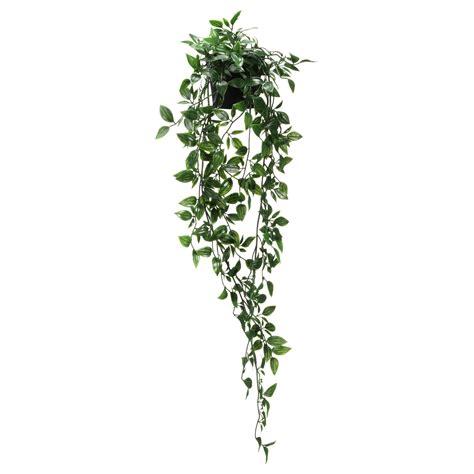 hanging vine plants daidai plant pot brass colour 9 cm ikea