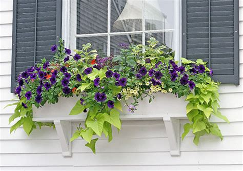 Window Box Ideas  Hyannis Country Garden