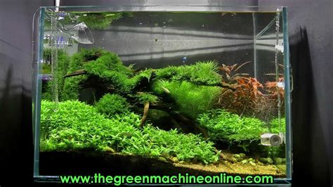 The Green Machine Aquascape by Riverbank Aquascape The Green Machine By Findley