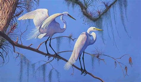 Peabody Exhibit Features Bird Paintings By Famed Wildlife