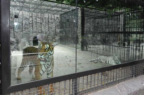 pyongyang nature museum  central zoo explore dprk