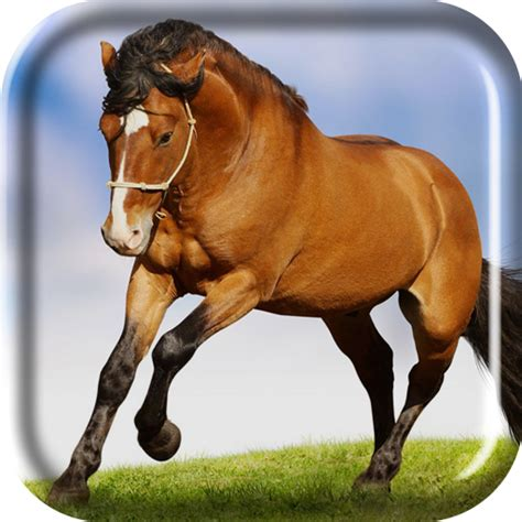 running horse  wallpaper gallery