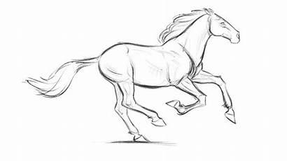 Animal Blaise Horse Drawing Aaron Animation Run