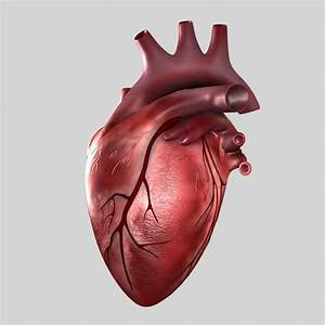 Real Human Heart - Cliparts.co