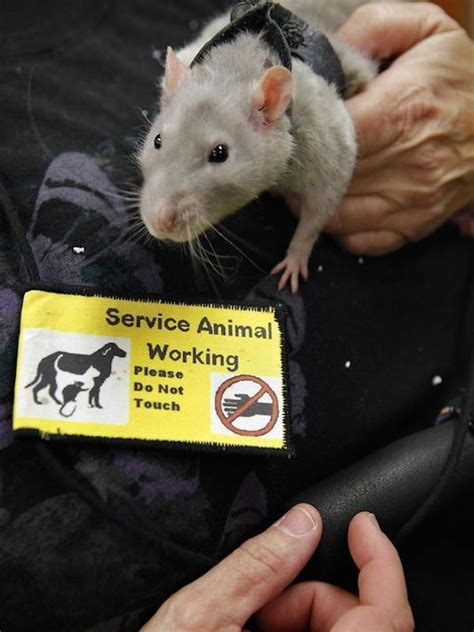 awesome  unusual service animals