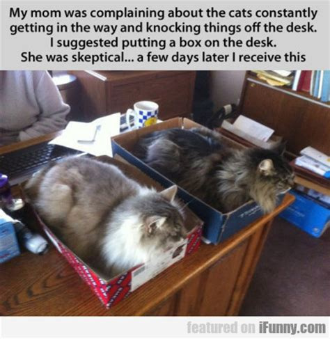 Cat Trap Meme - my mom was complaining about the cats ifunny com