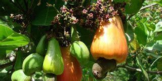 Ciri Ciri Reproduksi Klasifikasi ciri ciri klasifikasi dan reproduksi tumbuhan berbiji