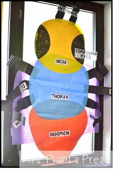 Insects Insect Kindergarten Parts Preschool Plantspress Science