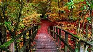 Autumn Forest Path HD Wallpaper Wallpaper Studio 10