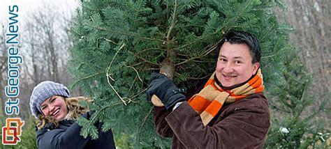 utah christmas tree permits kaibab national forest tree permits go on sale st george news