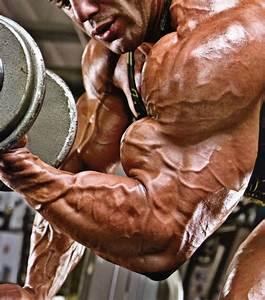 Massive  Vascular Biceps