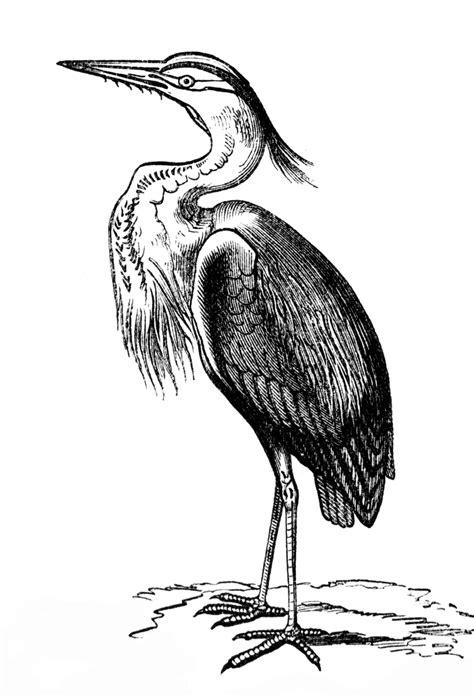 Heron   ClipArt ETC