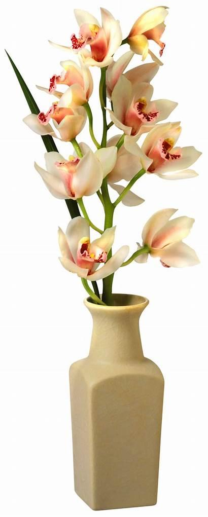 Vase Flower Transparent Clipart Orchid Clip Flowers