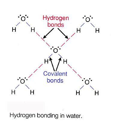 Hydrogen Bond Structure
