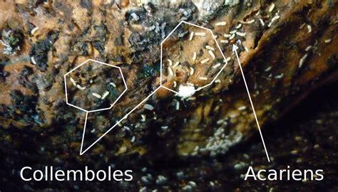 acariens de cuisine la pédofaune et le lombricompost