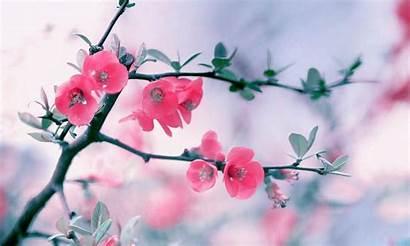 Spring Season Background Desltop Flowers