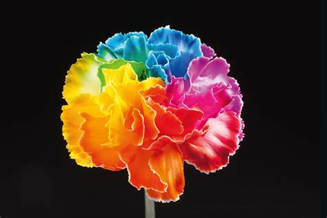 happy colors is a happy color anjers tulpen happy colors