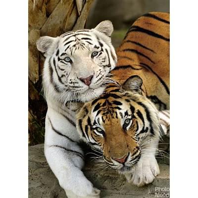 tigerPhoto Mood