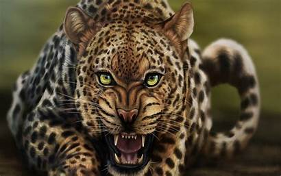 Leopard Animal Wild Cheetah Wallpapers Desktop Angry
