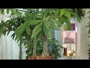 Entretien Plante Verte : l 39 entretien d 39 une plante verte d 39 int rieur n 39 aura plus de secret pour vous d couvrez comment s ~ Medecine-chirurgie-esthetiques.com Avis de Voitures