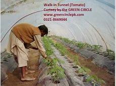 Movie 0321 8669044 Tunnel Vegetable Farming in Pakistan