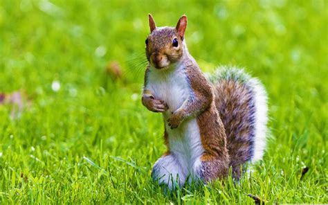 Live Animal Wallpapers Free For Pc - wallpaper wildlife squirrel 561569