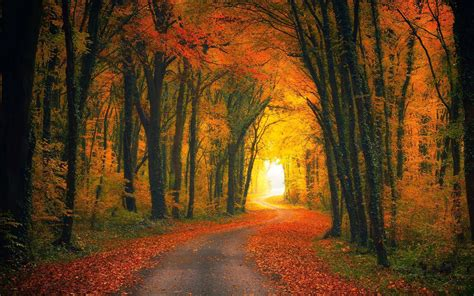 autumn forest wallpapers backgrounds