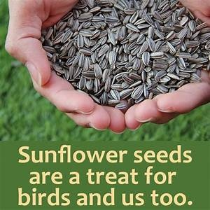Sunflower Facts For Kids And Adults To Discover