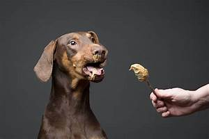 13 dogs trying peanut butter first time