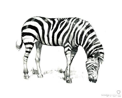 Zebra Sketch By Farshadfgd On Deviantart
