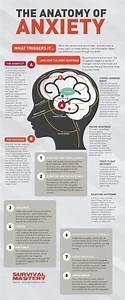 Best 25  Brain Anatomy Ideas On Pinterest