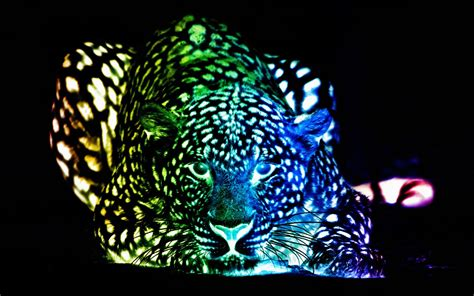 Colourful Animal Wallpaper - colorful cheetah wallpapers 61 images