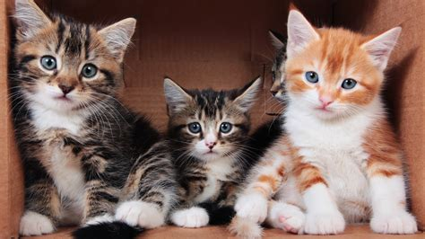 wallpaper  cute kittens  uhd  picture image