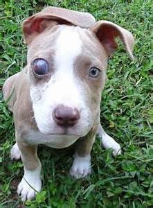 1000+ images about SE States ~ Pets Urgently Needing Love ...