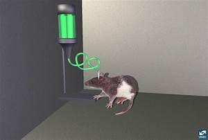 Deep Brain Stimulation  A Fix When The Drugs Don U0026 39 T Work